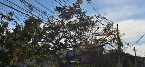 Rajadas de vento aumentam no RJ