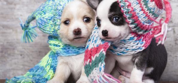 Pets exigem cuidados especiais no inverno