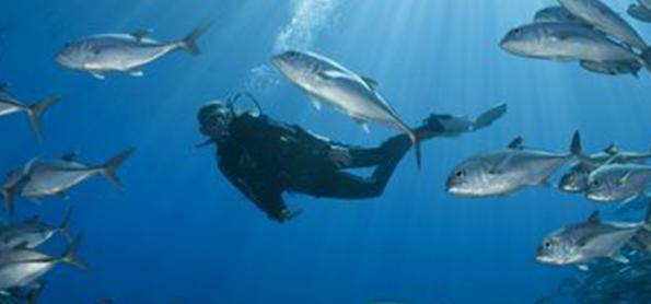 A importância da saúde oceânica para o desenvolvimento