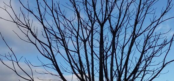Massa de ar frio chega ao Brasil neste domingo