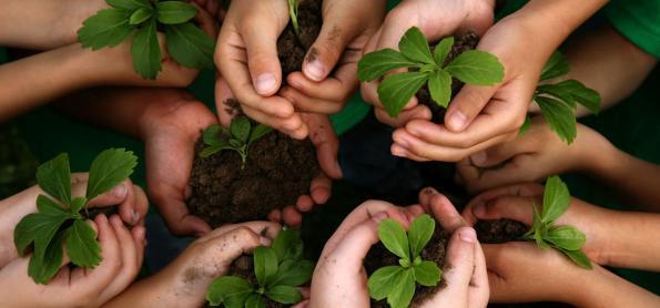 Você sabe a diferença entre produtos sustentáveis e ecológicos?
