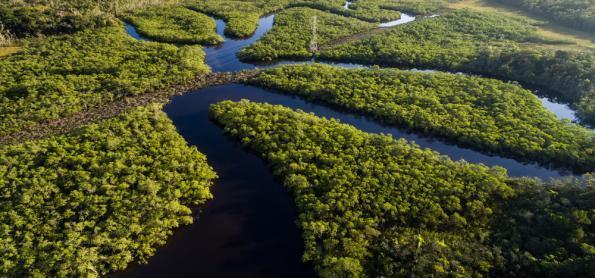 Artistas e cientistas se unem a contra covid-19 na Amazônia