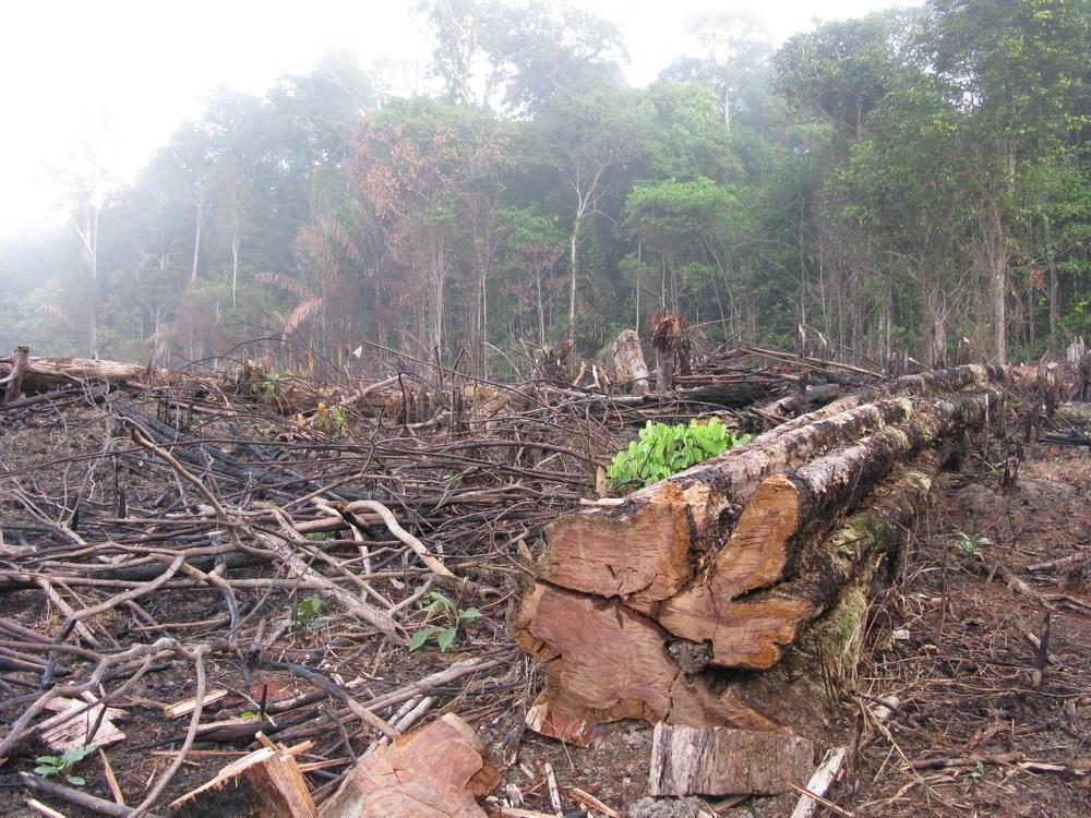 desmatamento (2)