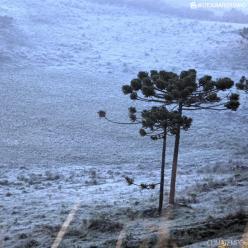 Nova massa de ar frio entra no Sul e geada pode ser forte