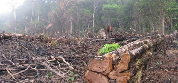 COP 23: do descaso dos EUA ao retrocesso ambiental do Brasil