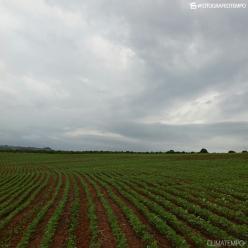 Chuva pode atrapalhar colheita da soja no PR