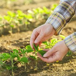 Chuva dá trégua e favorece colheita da soja no CO