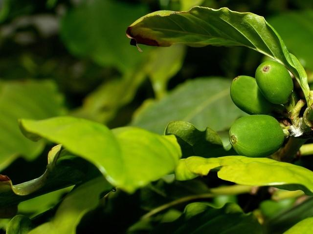 fresh-coffee-beans-1319405-640x480