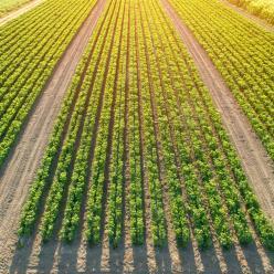 Colheita de soja no Paraná alcança 10%, afirma Deral