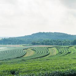 Clima beneficia lavouras no Sul do Brasil