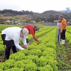 Menos sol, legumes mais caros