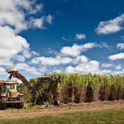 Umidade do solo favorece a cana de açúcar