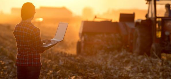 Clima favorece a produção agrícola no BR