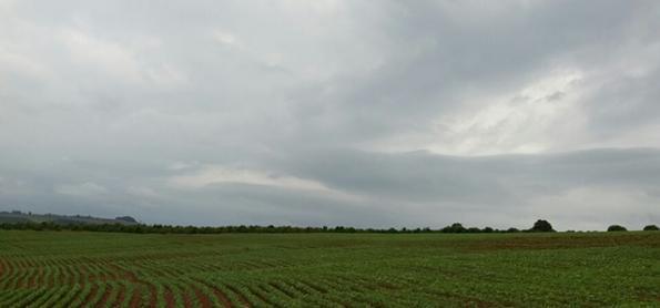 Chuva pode prejudicar lavouras de soja em grande parte do BR