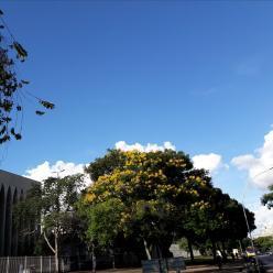 Mais sol em Brasília nesta sexta-feira