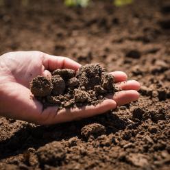 Falta de umidade inviabiliza desenvolvimento das lavouras