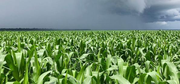 Safra de grãos do RS tem boa qualidade e produtividade