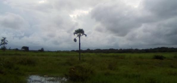 Brasília vai fechar 2018 com chuva acima da média anual