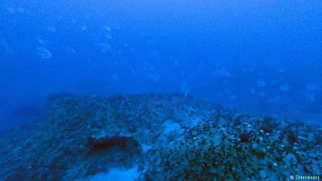 corais_Greenpeace_DW