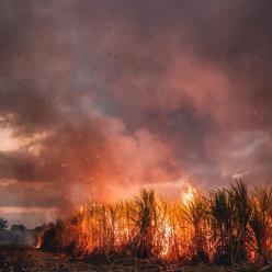 Focos de queimadas no BR é o maior dos últimos 5 anos