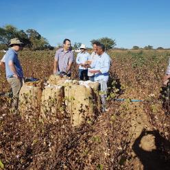 Pequenos produtores da BA buscam certificado sustentável