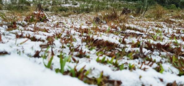 Pode nevar no Sul do Brasil
