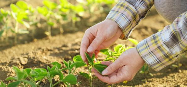 Plantio da soja avança em ritmo lento