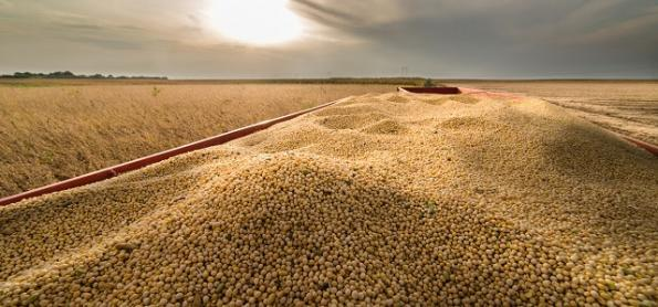 Plantio da soja será favorecido