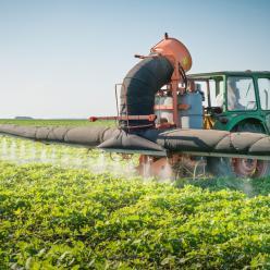 Tempo úmido aumenta o número de foco de doenças no campo
