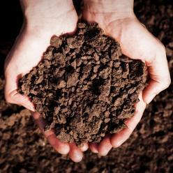 Umidade no solo favorece o avanço do plantio