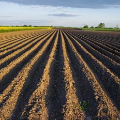 Como escolher um sistema de plantio?