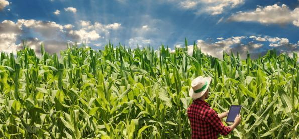 Soja e milho são destaques na produção agrícola