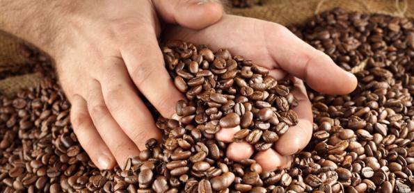 Produção de café na Ásia e Oceania cresce 8,3%