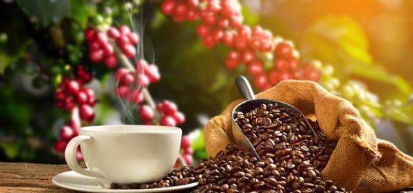 Produção dos Cafés do Brasil