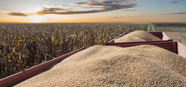 Soja: baixa umidade no solo pode afetar produtividade