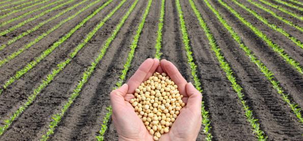 Colheita da soja é antecipada em Mato Grosso do Sul