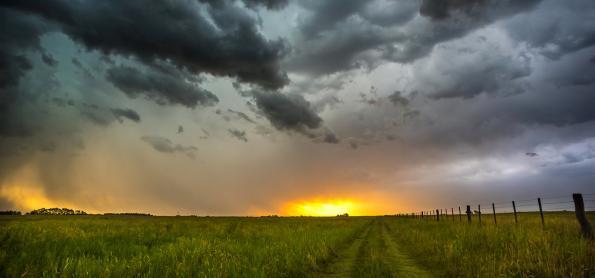 Clima favorece pastagens no Rio Grande do Sul