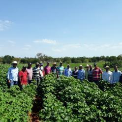 Produtores recebem kits de irrigação no sudoeste da BA