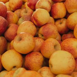 Conab aponta queda do preço da maçã e cebola