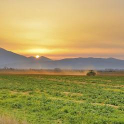 Técnicas sustentáveis de plantio preservam o solo