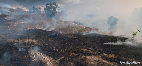 Estudo pode melhorar o monitoramento de queimadas no Cerrado