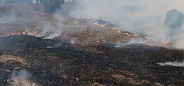 Efeitos do fogo na germinação de espécies do cerrado