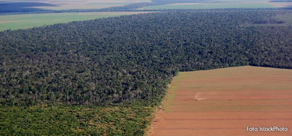 Brasil foi país que mais perdeu florestas tropicais nativas em 2018