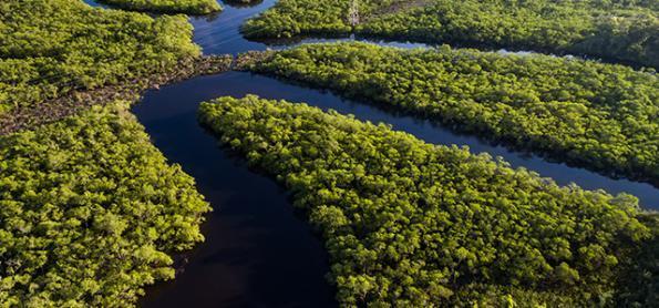 Conexão Mata Atlântica reforça importância de preservar