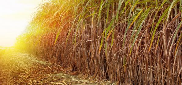Produção de etanol no país mantém recorde