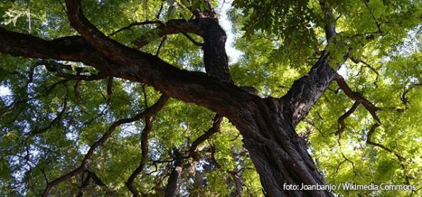 Poluição do ar afeta o crescimento de árvores em São Paulo