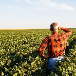 Produtores atingidos pela seca irão receber o Garantia Safra