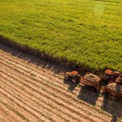 Plano safra beneficia pequenos, médios e grandes produtores