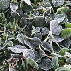 Espírito Santo gelado: frio recorde em Vitória e geada na serra