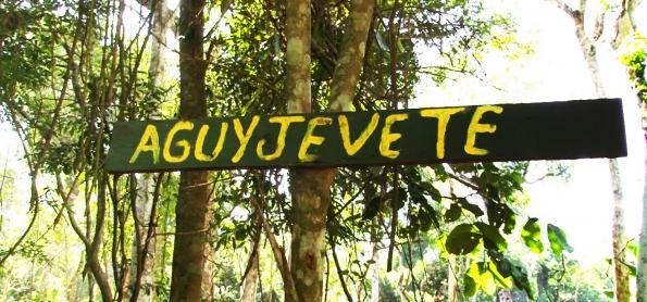 Forest Experience: uma imersão na cultura guarani